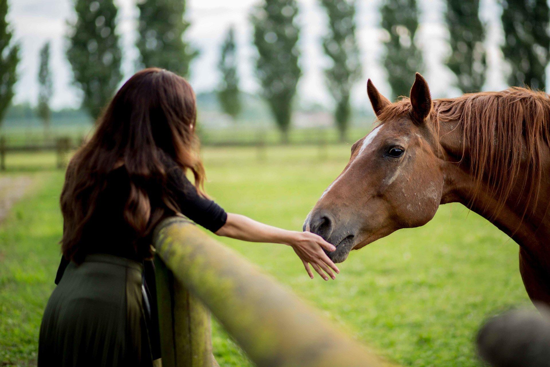 bambina che accarezzza cavallo