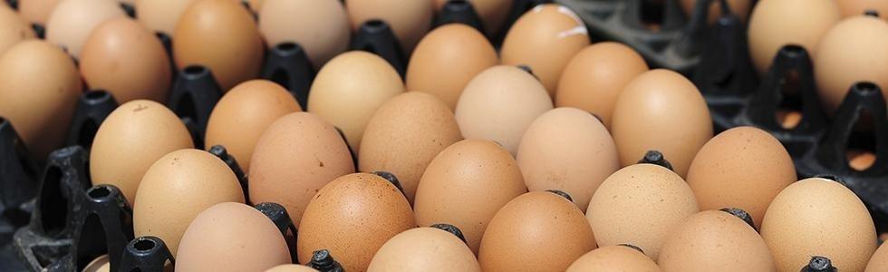 Uova fresche pastorizzate