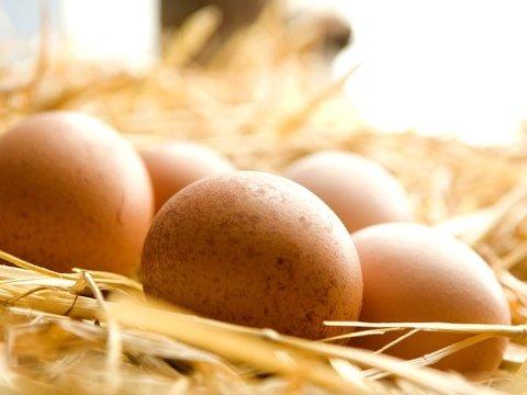 Allevamento di uova freschissime
