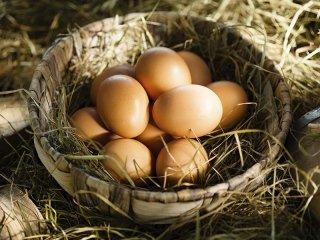 Commercio uova fresche