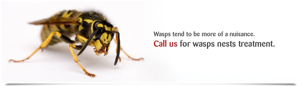 Wasp Control Service Nest Removal In Peterborough