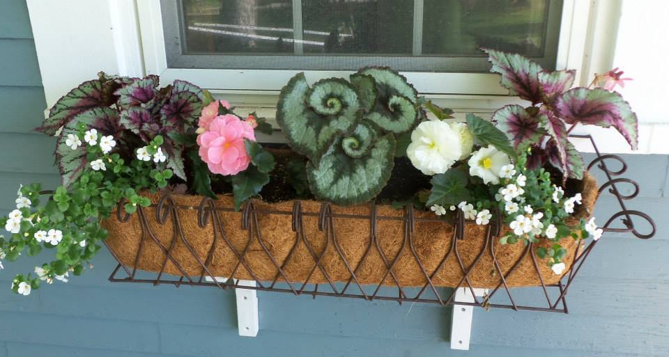 Veterinary Clinic Flower Box Boothbay & Damariscotta, ME