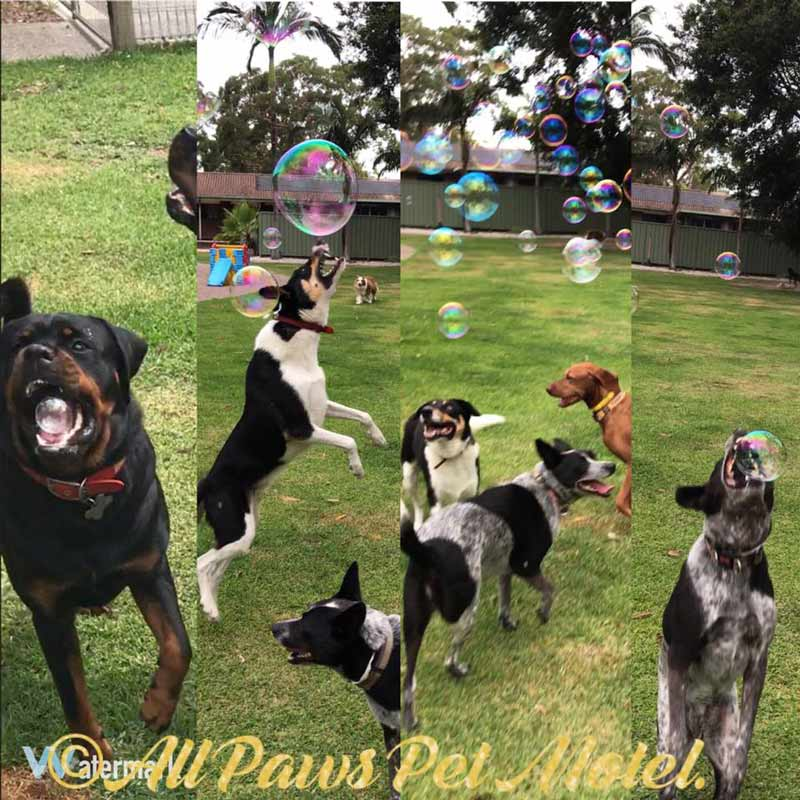 dogs chasing bubbles