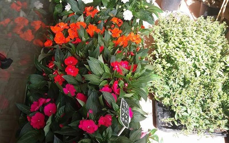 Piante e fiori on line