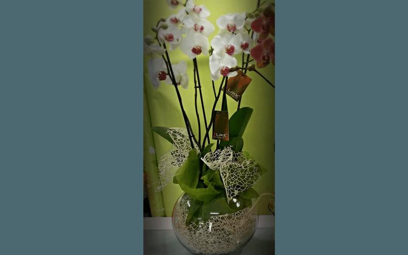 Addobbi floreali comunioni
