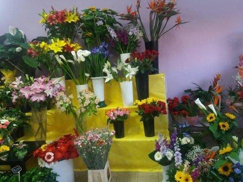Piante e fiori da giardino