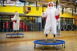 un uomo vestito da gallo su un tappeto elastico