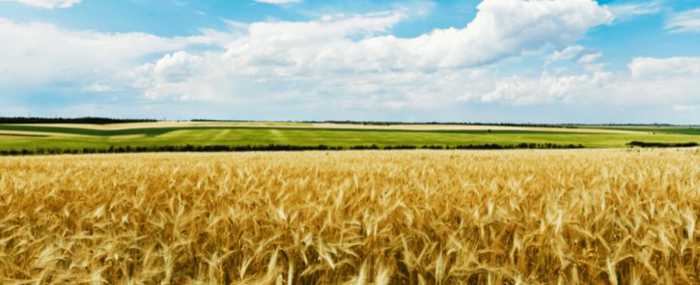 analisi terreni agrari