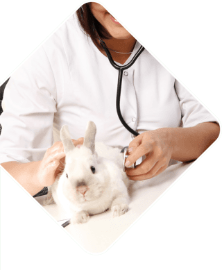 ambulatorio veterinario elianto