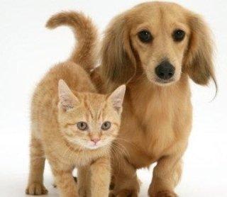 ecografia per animali