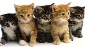 pronto soccorso per animali