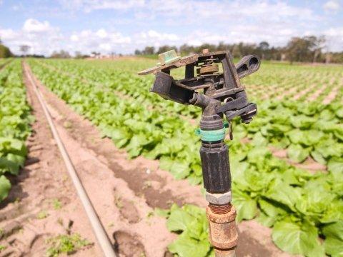 Servizi connessi all'agricoltura