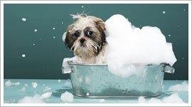 lavaggio animali