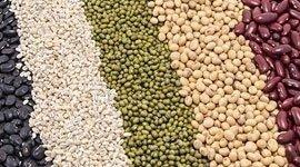 produzione lenticchie