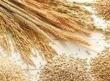 produzione grano