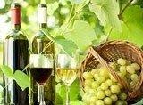 vendita vino