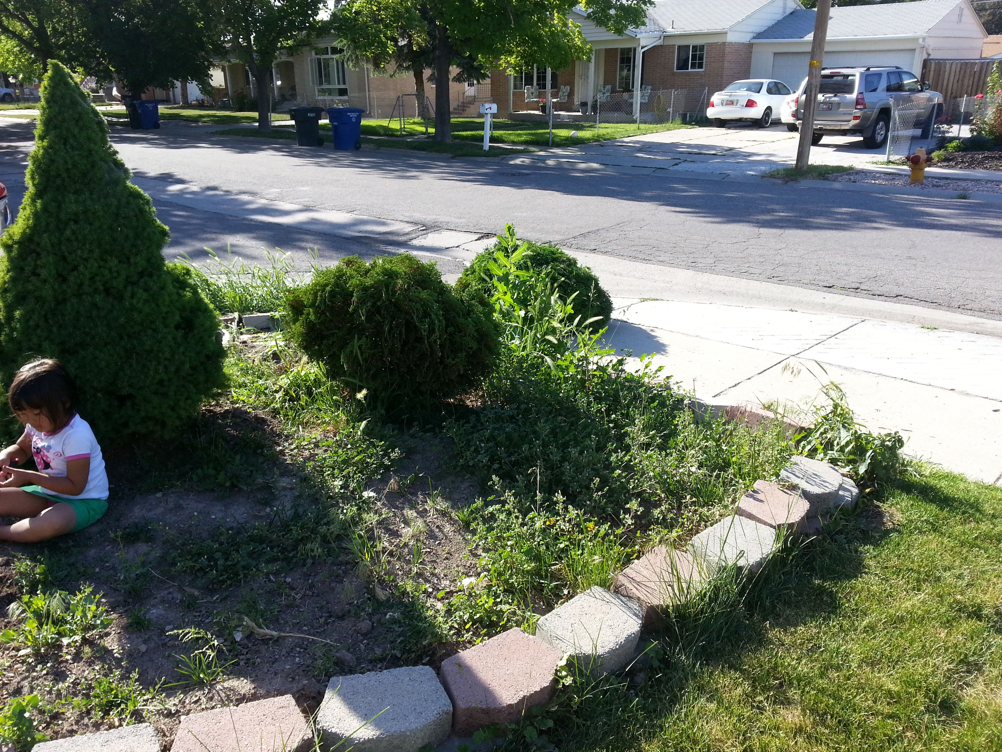 Flower bed makeover project (BEFORE)