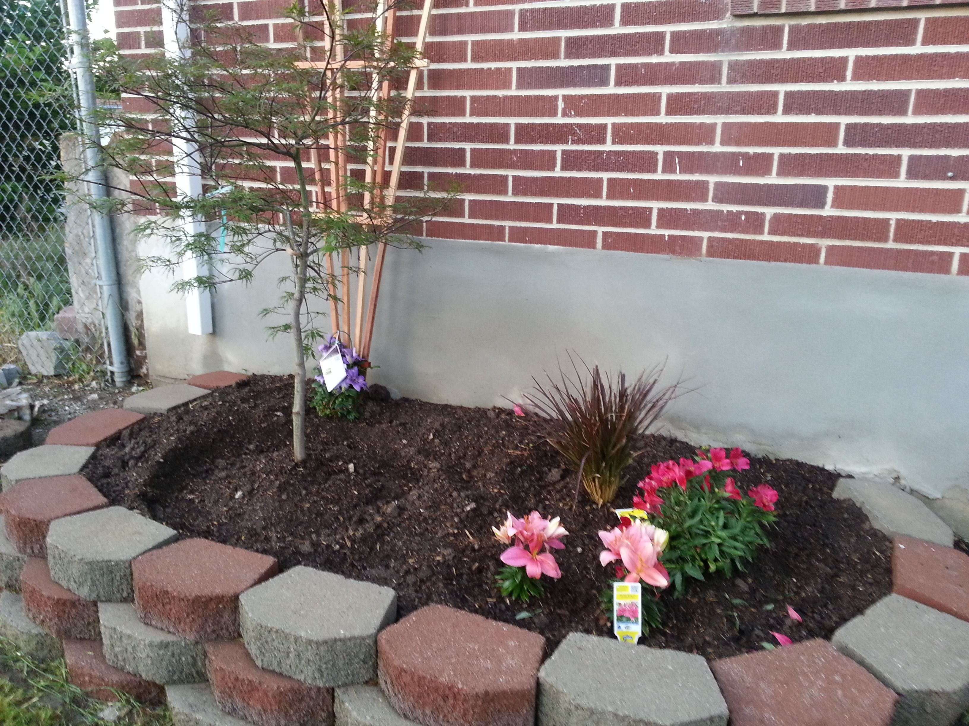 Flower bed makeover (AFTER) - added decorative trellis to soften wall, wood chips, perennials, and lace leaf japanese maple