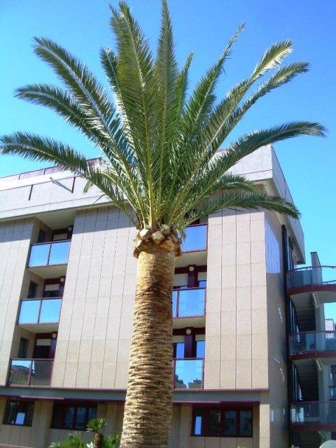potatura palmizi