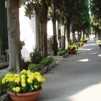 piante ornamentali per verde pubblico