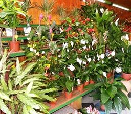 piante da interni in esposizione