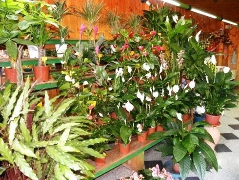 composizione piante ornamentali