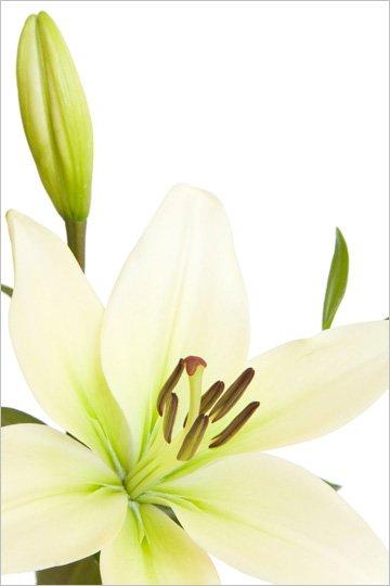 Funeral directors - Portadown - Quinn Bros - Funeral flower