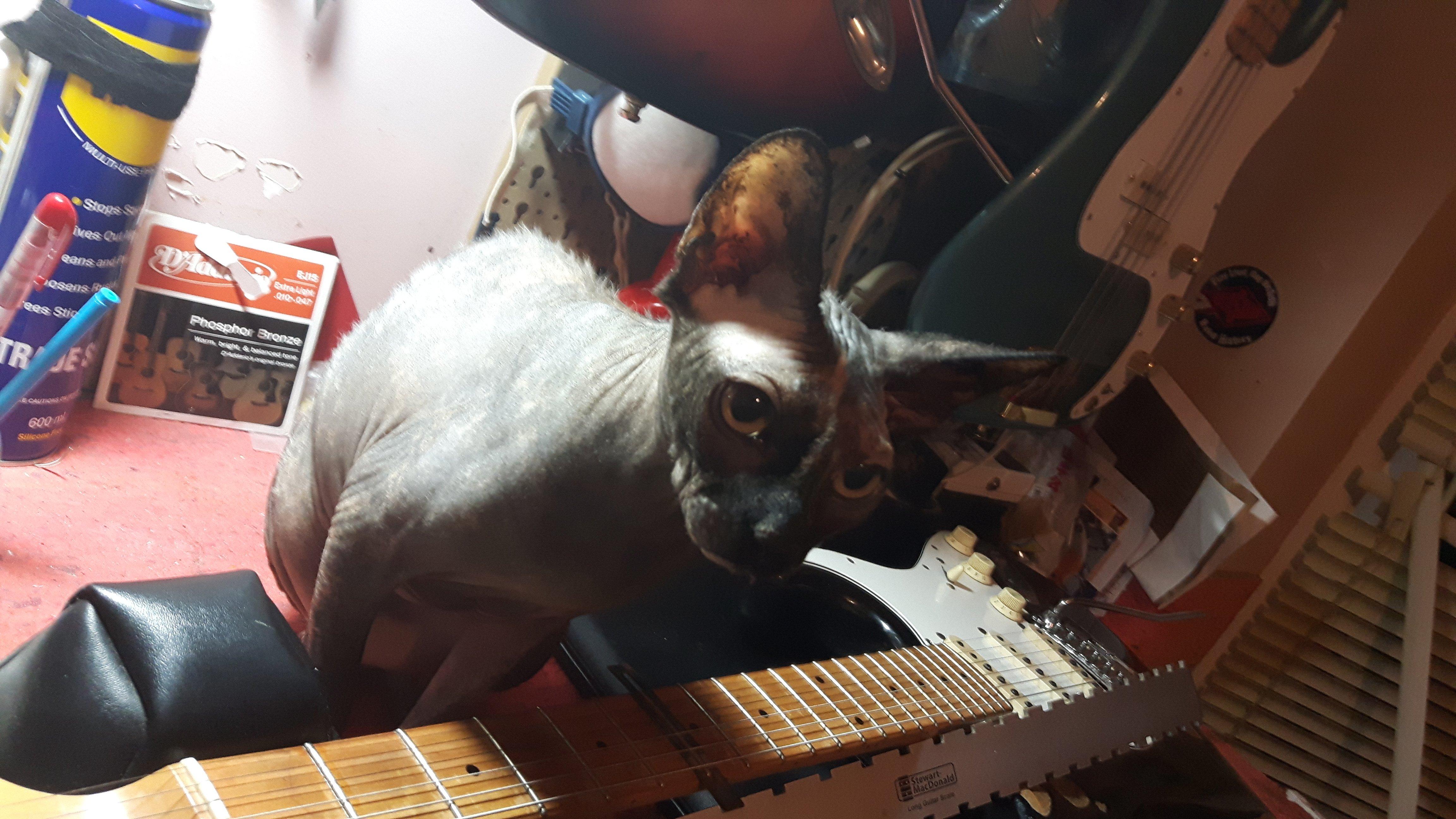 Quality guitar repairs