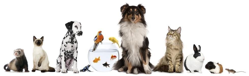 vendita animali domestici