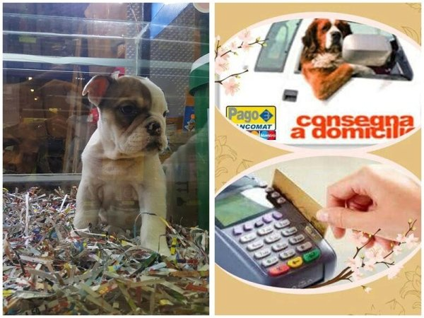 vendita on line articoli animali