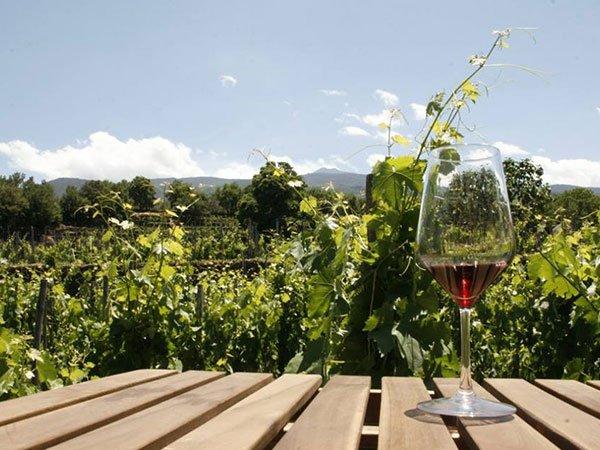un tavolo di legno con un bicchiere di vino rosso mezzo vuoto e dietro un vigneto