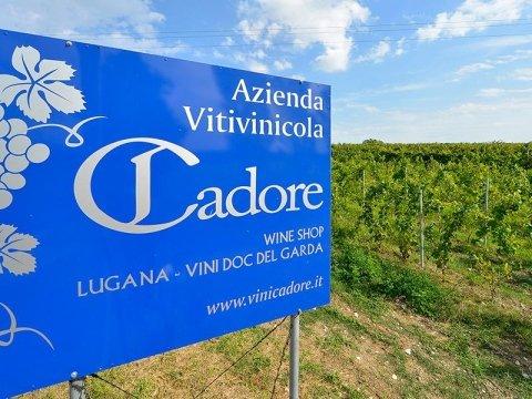 Azienda vinicola Cadore