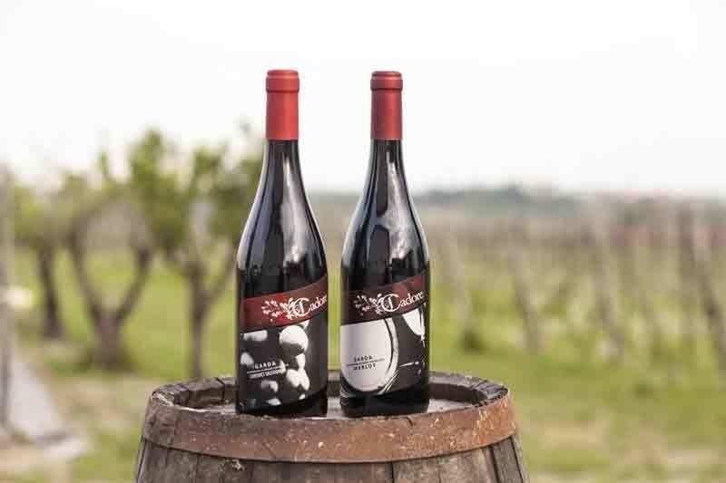 Wine at Lake Garda