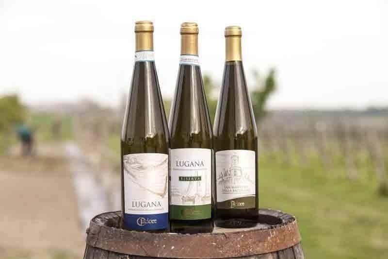 Wine producer
