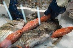 Banco del Pesce di Pescheria Spadari