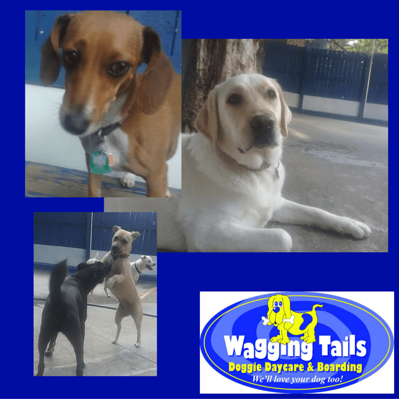 Photo fun friday wagging tails doggie daycare for A wagging tail pet salon