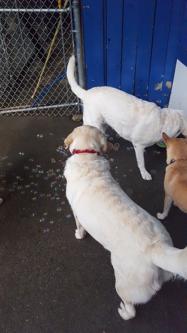 April 1 friday fun pics from wagging tails doggie daycare for A wagging tail pet salon