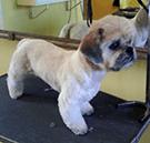 ozonoterapia per cani osio sopra