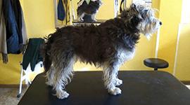 trattamenti per cani da esposizione