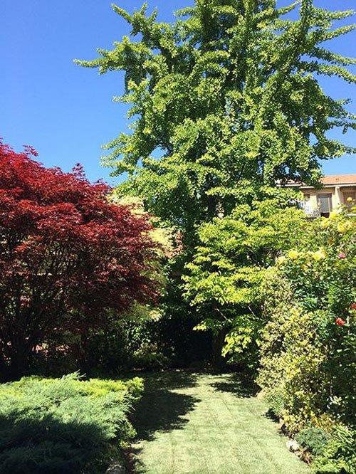 Vista delle piante con foglie verdi e rossi,  in mezzo un prato e vista di una casa