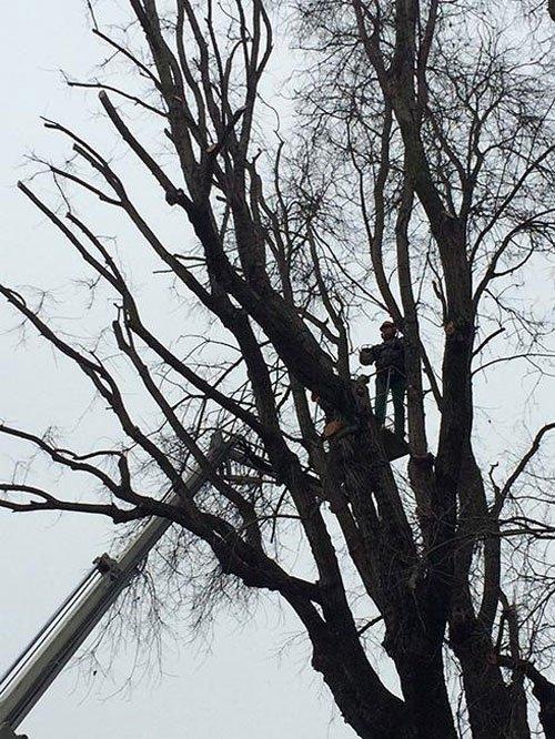 Un uomo su un albero mentre taglia un albero e affianco si vede un braccio meccanico di mezzo da lavoro