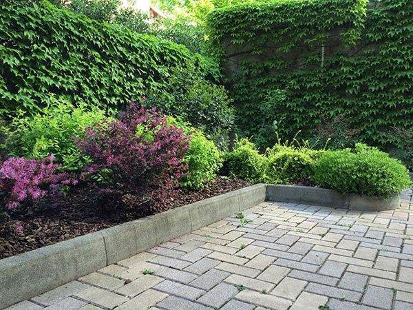 Un muro con delle piante rampicanti acconto altre piantine e una pavimentazione esterna