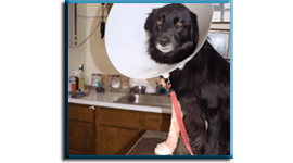 ortopedia veterinaria, otorinolaringoiatria veterinaria, radiologia per animali
