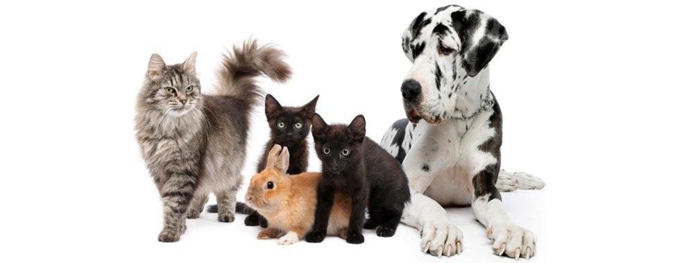 Cibo per animali domestici