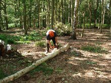 One of the team cutting up a log