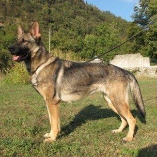 correzione problemi comportamentali cani