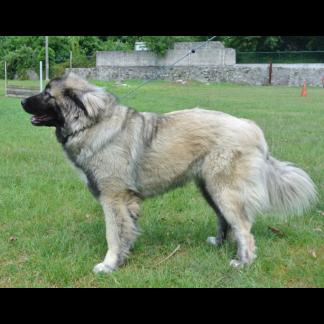 Addestramento cani da difesa