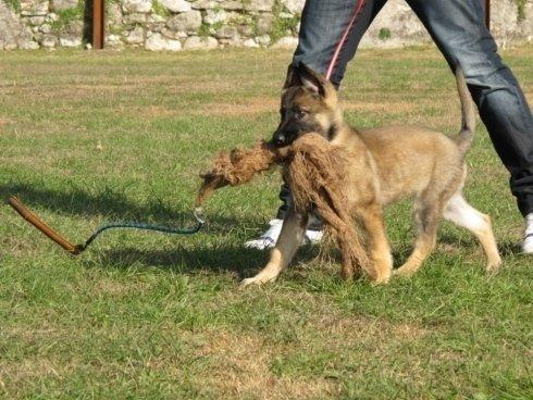 addestramento cani cuccioli