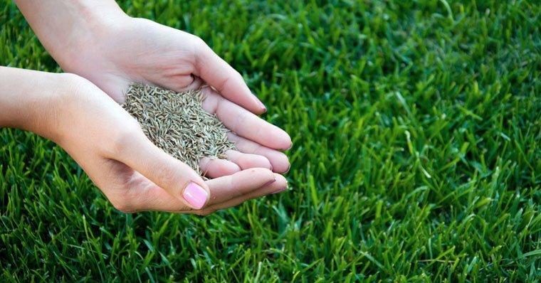 Premium Quality Grass Seed