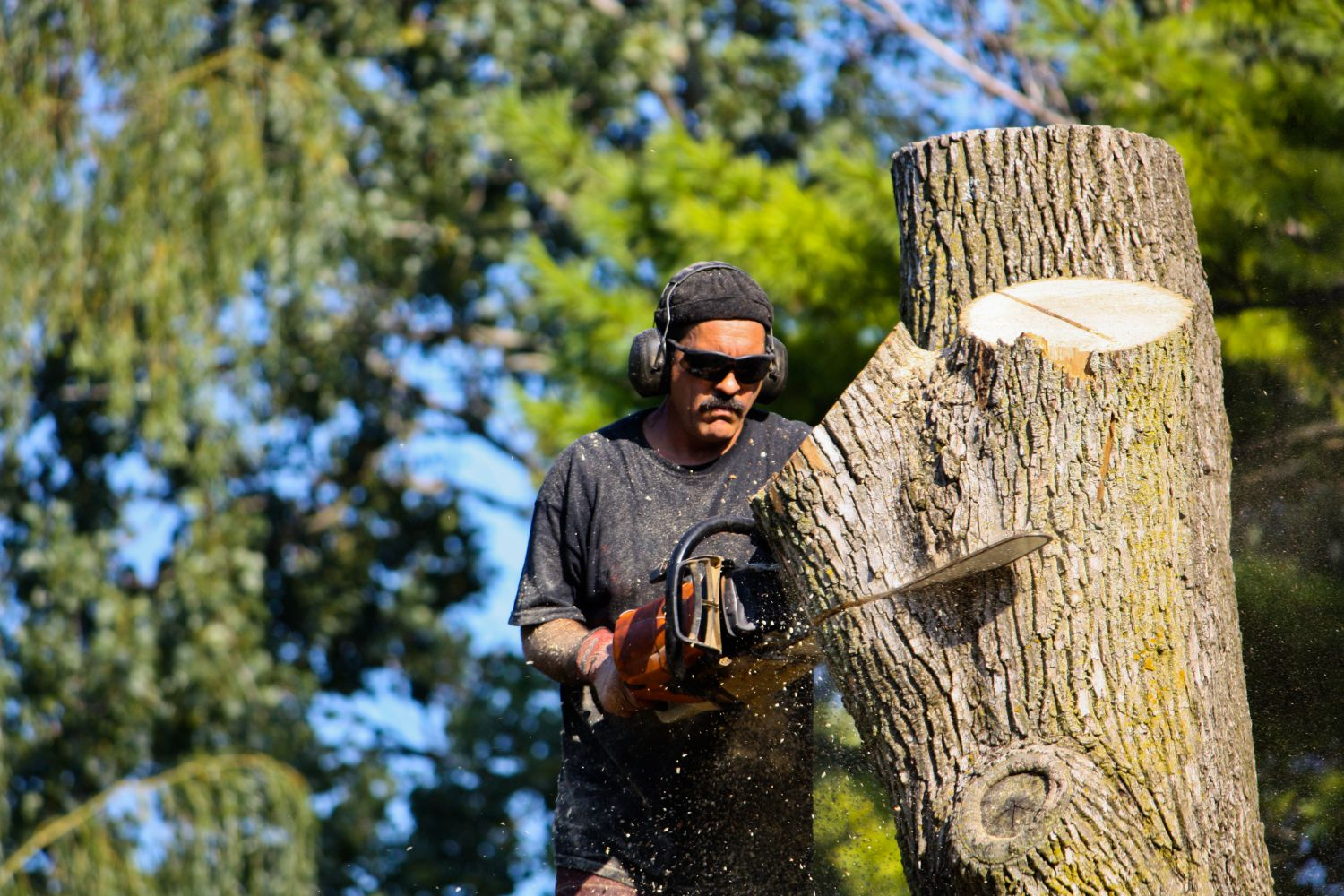 Sawing tree during local tree service in Cincinnati, OH